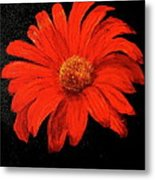 Gerbera Metal Print by Heather Matthews