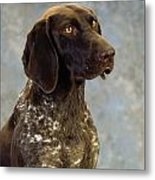 German Pointer Portrait Of A Dog Metal Print