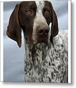 German Shorthaired Pointer 442 Metal Print