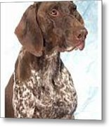 German Shorthaired Pointer 960 Metal Print