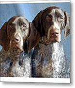 German Shorthaired Pointers 127 Metal Print