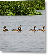 Get Your Ducks In A Row Metal Print
