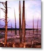Geyser Basin Trees Metal Print