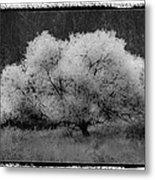Ghost Tree Metal Print