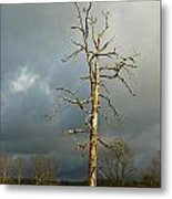 Ghost Tree Metal Print