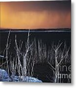 Ghostly Tree Skeletons And The Smoke From Fire Metal Print