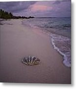 Giant Clam Shell On A Deserted Beach Metal Print
