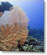 Giant Gorgonian Coral Metal Print