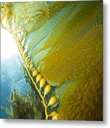 Giant Kelp, Catalina Island, California Metal Print