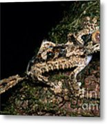 Giant Leaf Tail Gecko Metal Print