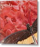 Giant Swallowtail - 3 Metal Print