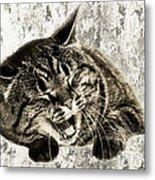 Giggle Kitty  Metal Print