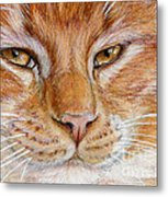 Ginger Cat  Metal Print