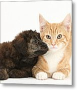 Ginger Kitten And Toy Poodle Metal Print