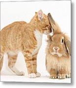 Ginger Kitten With Sandy Lionhead Rabbit Metal Print
