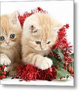 Ginger Kittens Metal Print