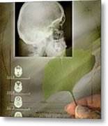 Ginkgo In Medicine Metal Print