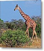 Giraffe Against Blue Sky Metal Print