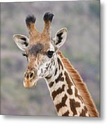 Giraffe Close-up Metal Print