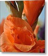 Gladiola Blooms Metal Print