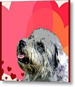 Glen Of Imaal Terrier Metal Print