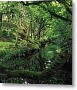 Glengarriff River, County Cork, Ireland Metal Print