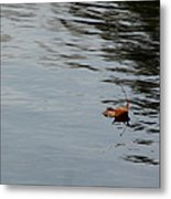 Gliding Across The Pond Metal Print