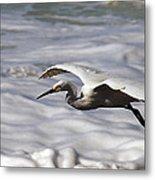 Gliding Snowy Egret Metal Print