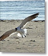 Gliding In Metal Print