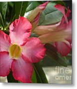 Glimmer Of Pink Metal Print