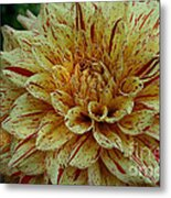 Glorious Gloriosa  Metal Print