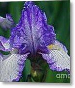 Glorious Iris Metal Print