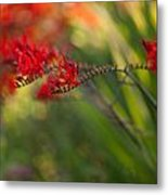 Glorious Red Metal Print