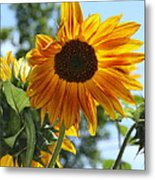 Glory Glory Sunflower Metal Print