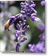 Glowing Bee In Purple Flowers Metal Print