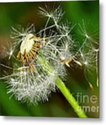 Glowing Dandelion Spores Metal Print
