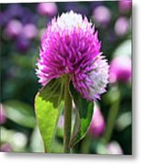 Glowing Globe Amaranth Metal Print