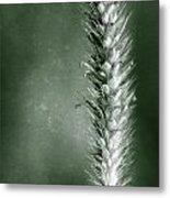 Glowing Grass Seedhead Metal Print