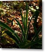 Glowing Iris Plant 3 Metal Print