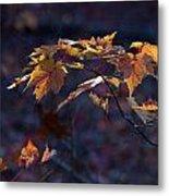 Glowing Maple Leaves Metal Print