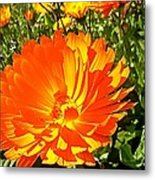Glowing With Beauty Metal Print