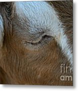 Goat Dreams Metal Print