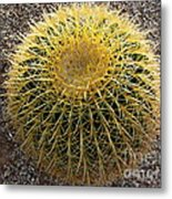Gold Barrel Cactus   No 1 Metal Print