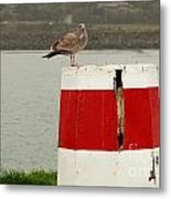 Gold Beach Gull Metal Print