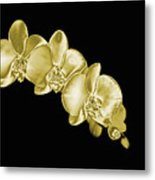 Gold Phaelenopsis Orchid On A Black Background Metal Print