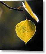 Golden Aspen Leaf Metal Print