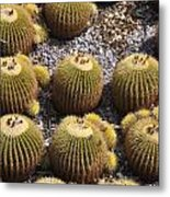 Golden Barrel Cactus 2 Metal Print