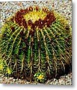 Golden Barrel Cactus Metal Print