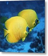 Golden Butterflyfish Pair Metal Print