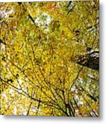 Golden Canopy Metal Print by Rick Berk